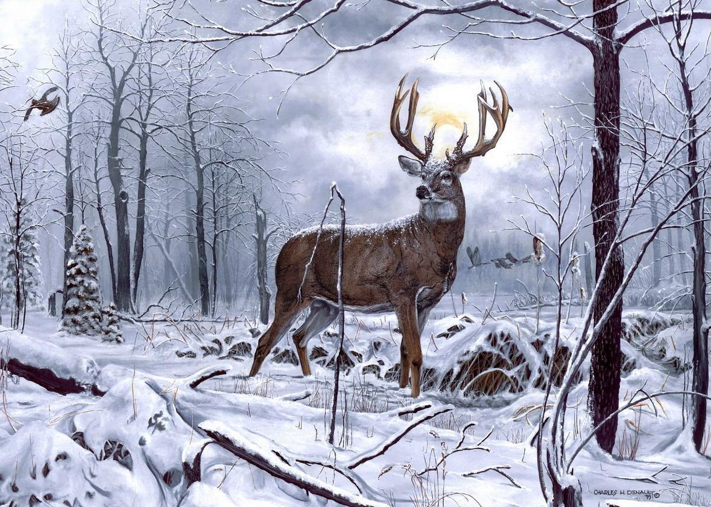 Картинки с оленем зимние
