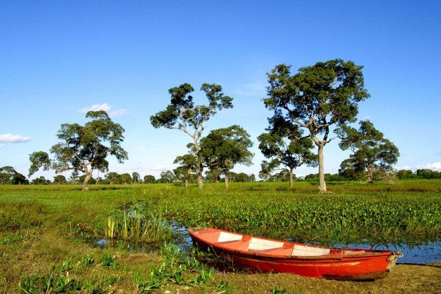Природа Бразилиикрасочно