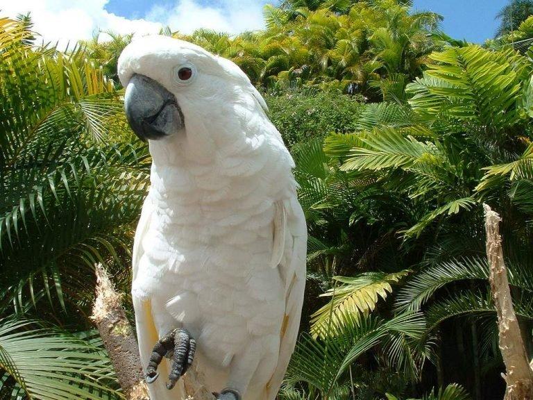 Попугай белые картинки