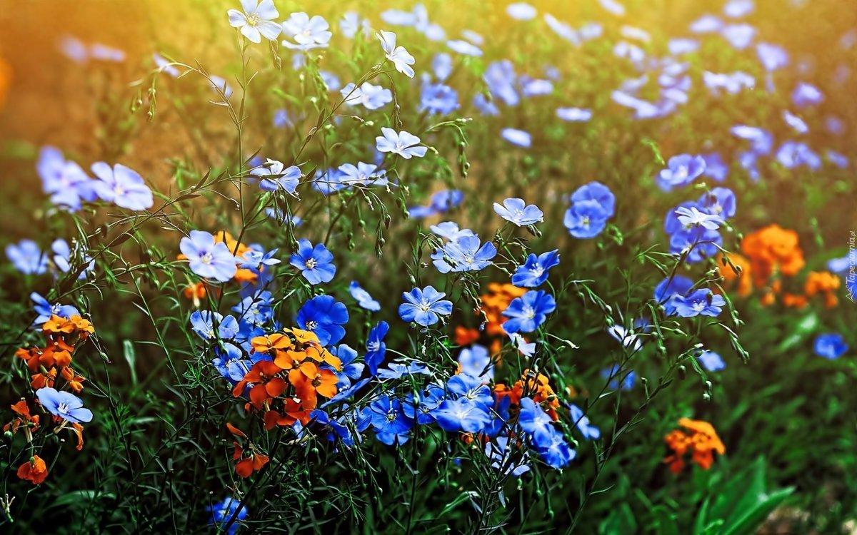 Фото открытка цветы луговые