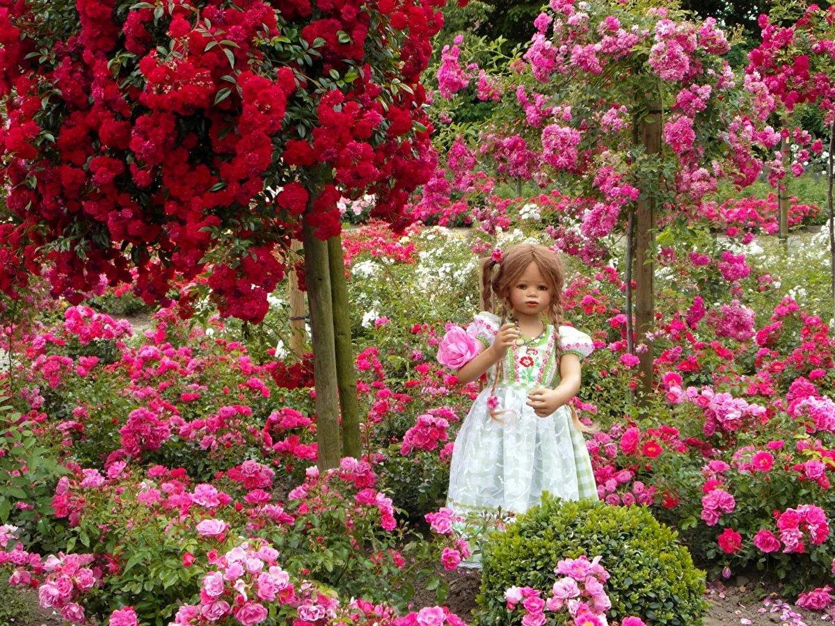 розовый сад фотографии шлюз может отфутболить