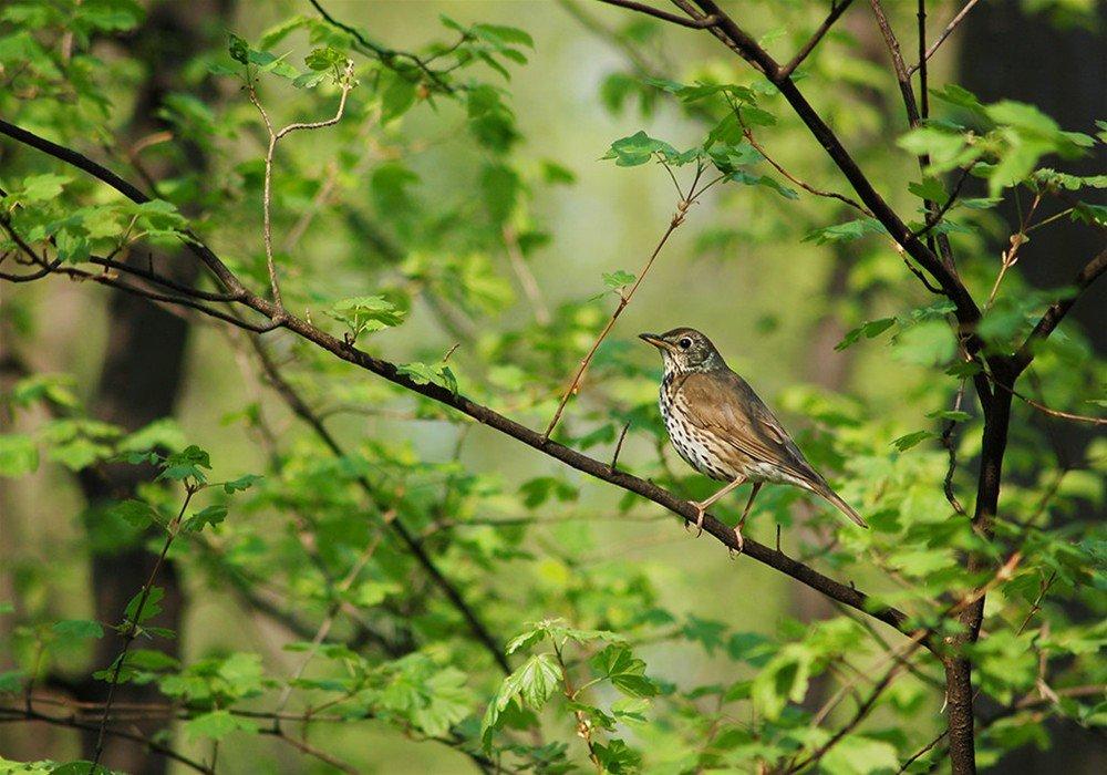 поклейки картинки птицы в весеннем лесу этом чате люди