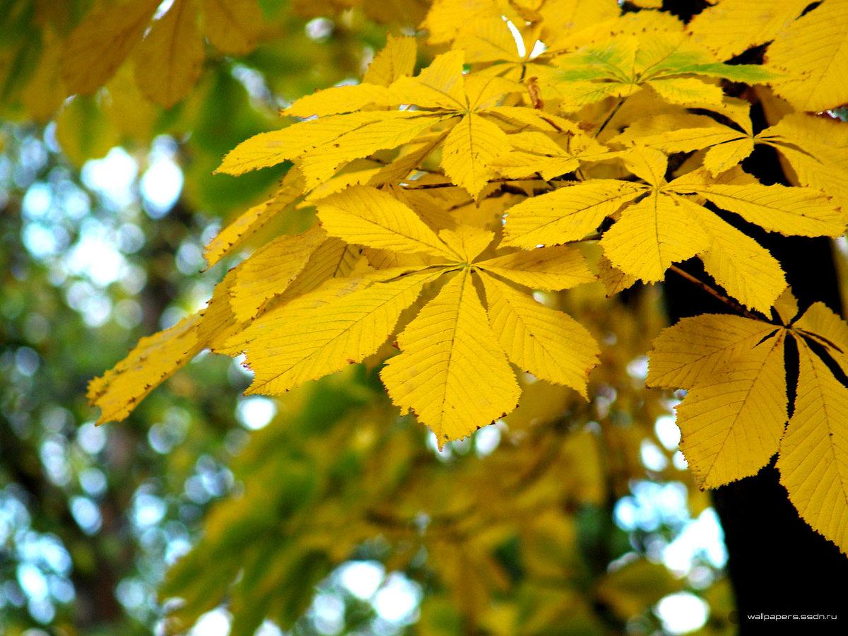 подробнее фото осенних листьев деревьев с названиями зимний пейзаж