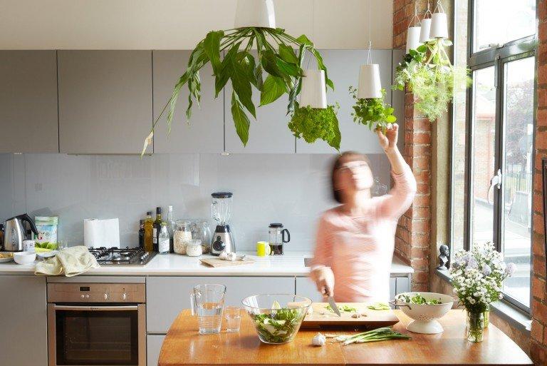 Для кухни следует приобретать растения, которые могут переносить перепады температур. Терпеть кухонные ароматы и жару могут алоэ, фикус, аспарагус, а также любые искусственные цветы.