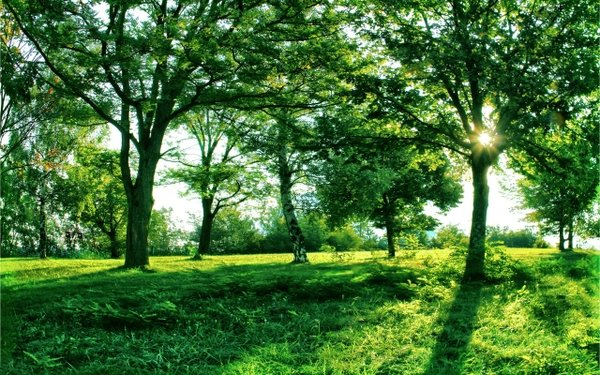 green nature sun trees grass 2560x1600 wallpaper wallpaperswa com 74