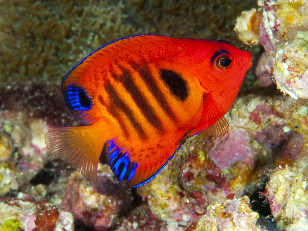 сведения печать красивые рыбы с названиями фото работник