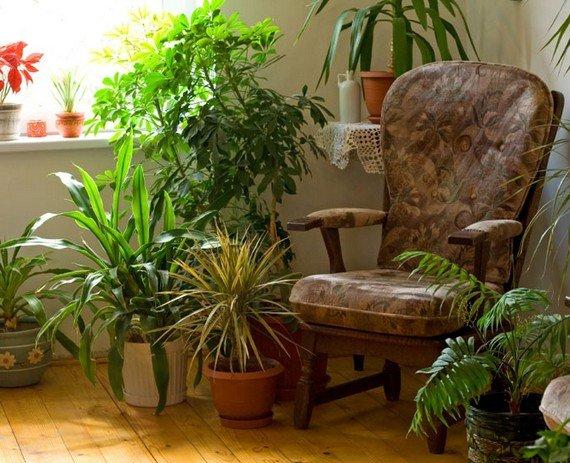 Комнатные растения и цветы в интерьере.