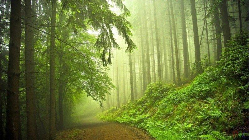 туман, загадочный пейзаж