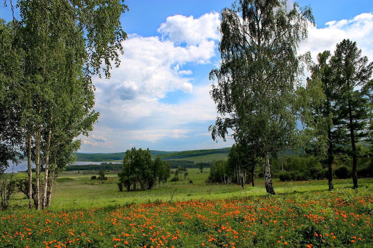 Комментарии, картинки природа сибири лето