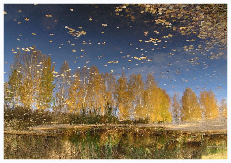 Листопад, пейзаж, вода, осень