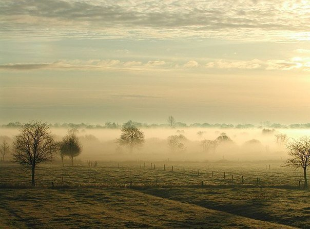 Облетевшие деревья в тумане