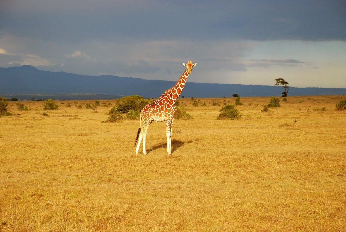 года все картинки про жирафа травмы