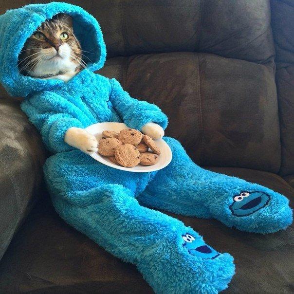 Кот в пижаме