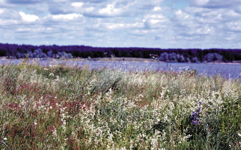 Русское поле весной, 1920х1080 - Обои Весна 2017. Весенние HD обои ... Русское полевое разнотравье весной. На заднем плане катит свои воды  какая-то речушка, над полем проплывают низкие облака...Интересный русский  фотопейзаж для ...