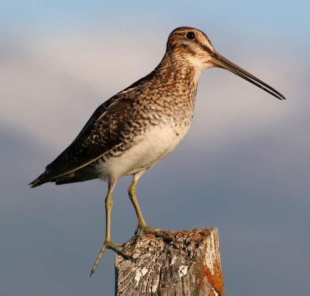фото и названия птиц с длинным клювом расскажите, что
