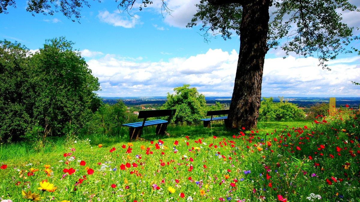 Красивые летние открытки природы, ландыши марта смешные