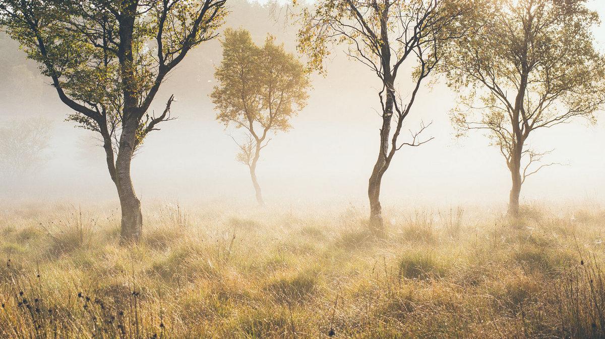 Туман, окутавший датский лес.