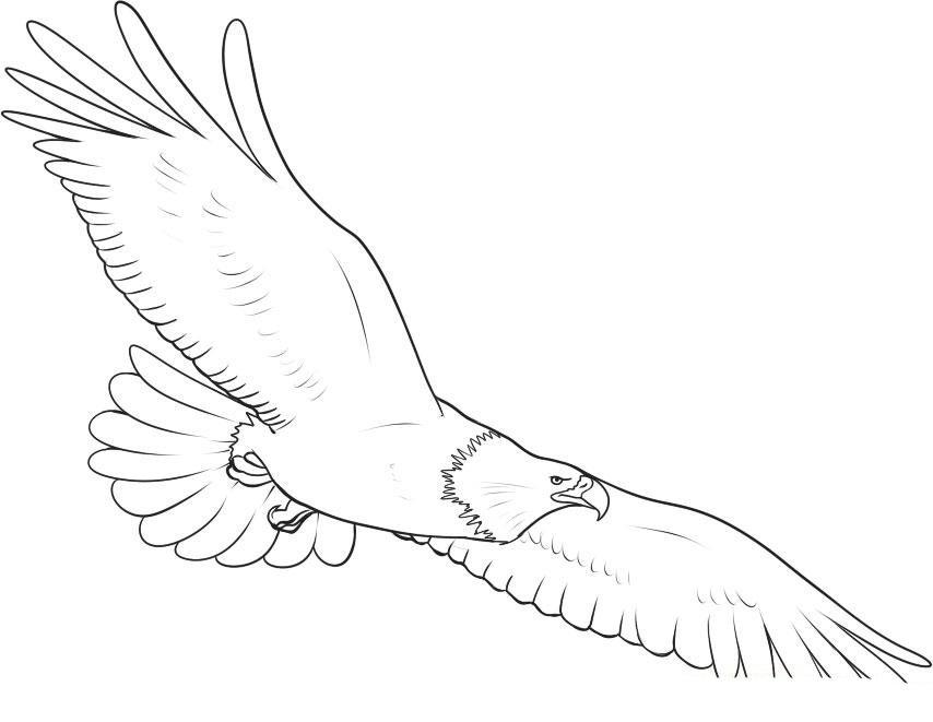 раскраска орел в полете следует понимать, что