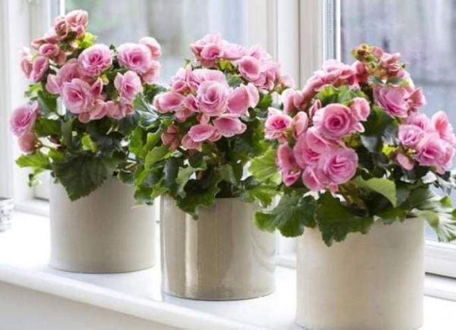Цветы в доме по фен-шуй оказывают влияние на энергетику жилища и его обитателей.