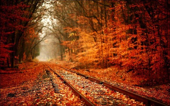 листопад осенью