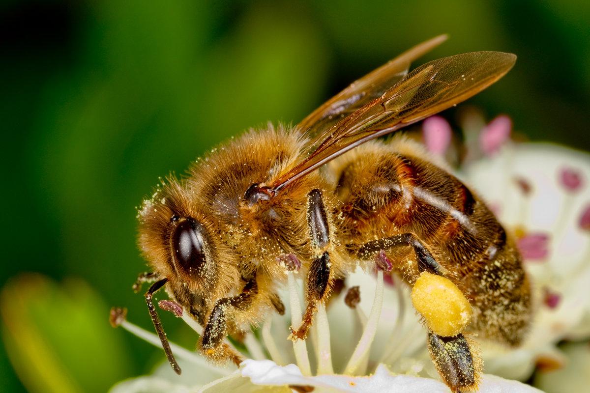 Пчелы фото картинки, поздравление старым
