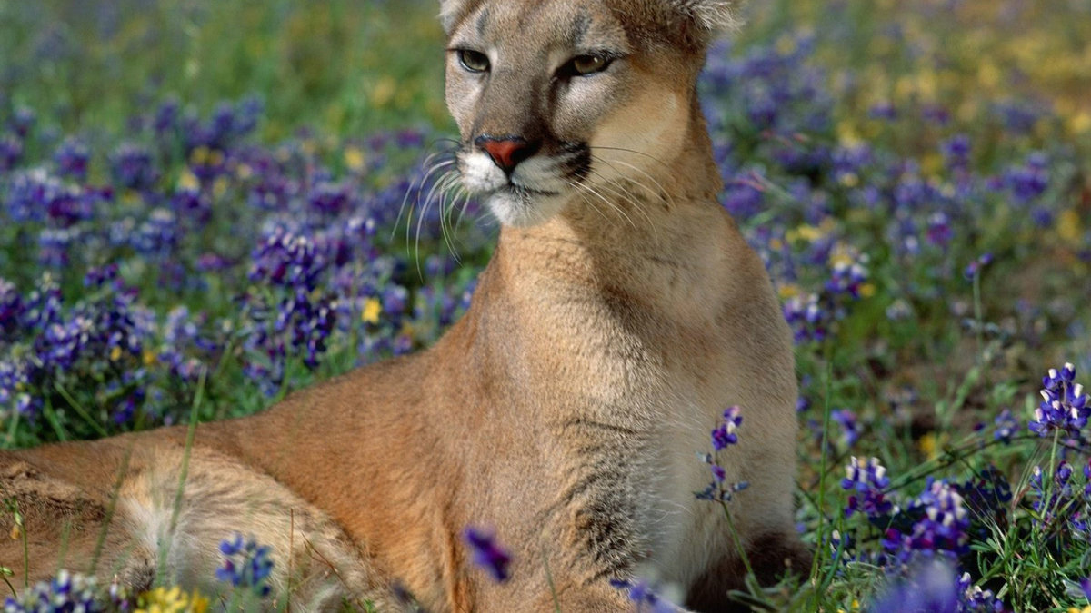 Картинки природа животные цветы