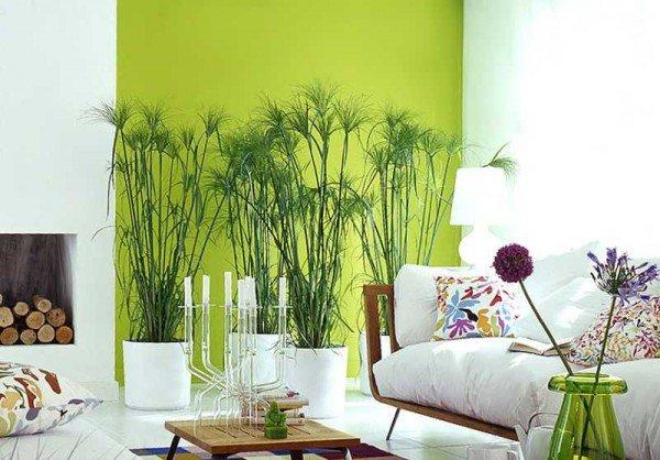 Растения в белой гостиной с салатовой акцентной стеной