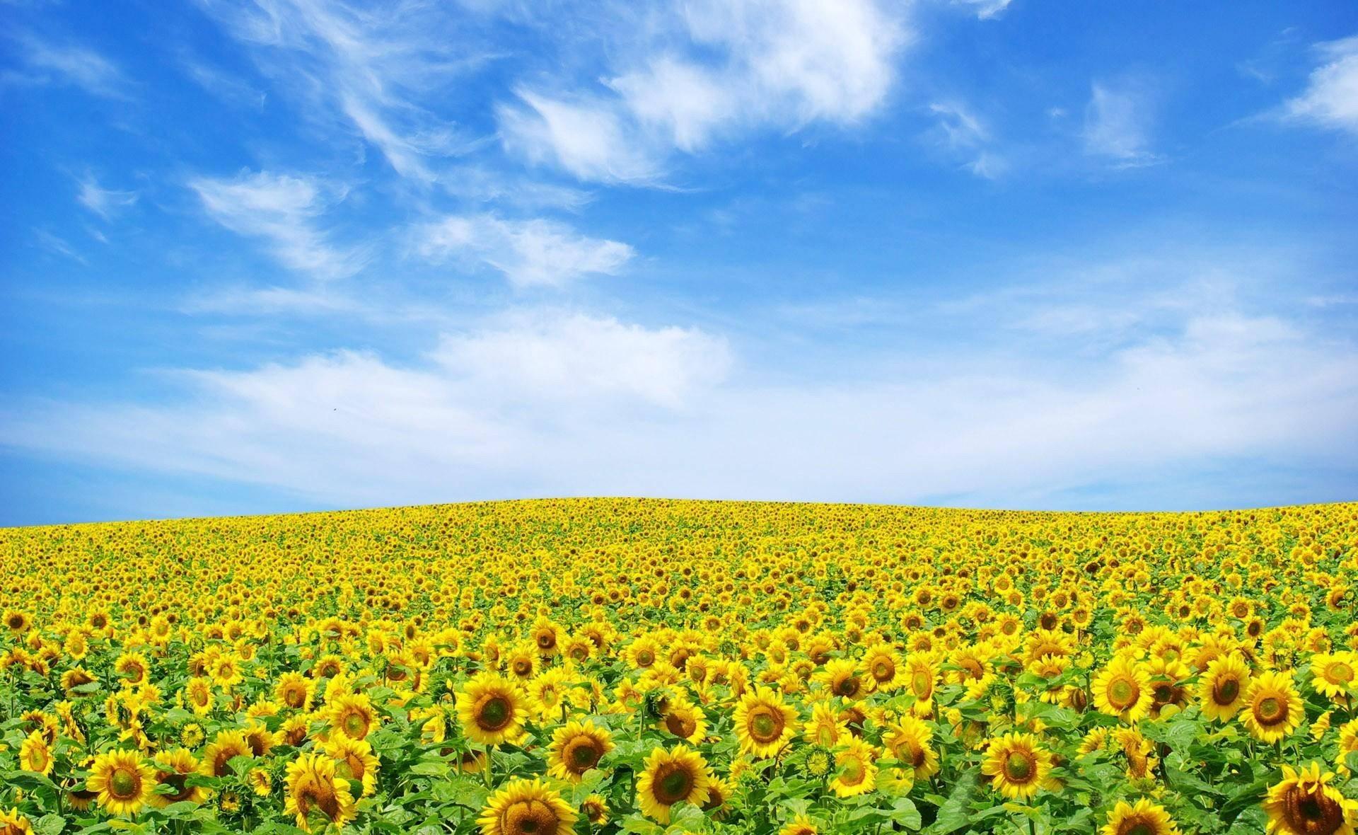 Природа, лето - Красивые Wallpapers обои для рабочего стола ... | 1180x1920