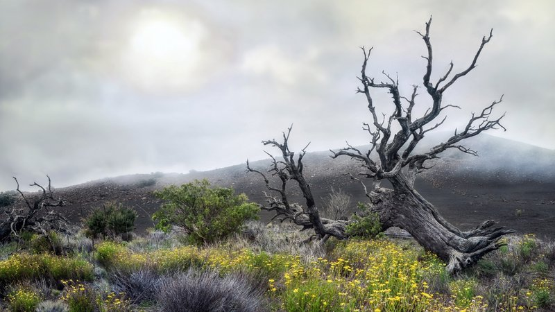 туман  и сухое  дерево