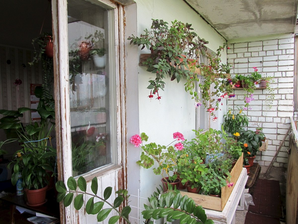 Зимний сад на балконе будет как нельзя кстати для тех, кто д.