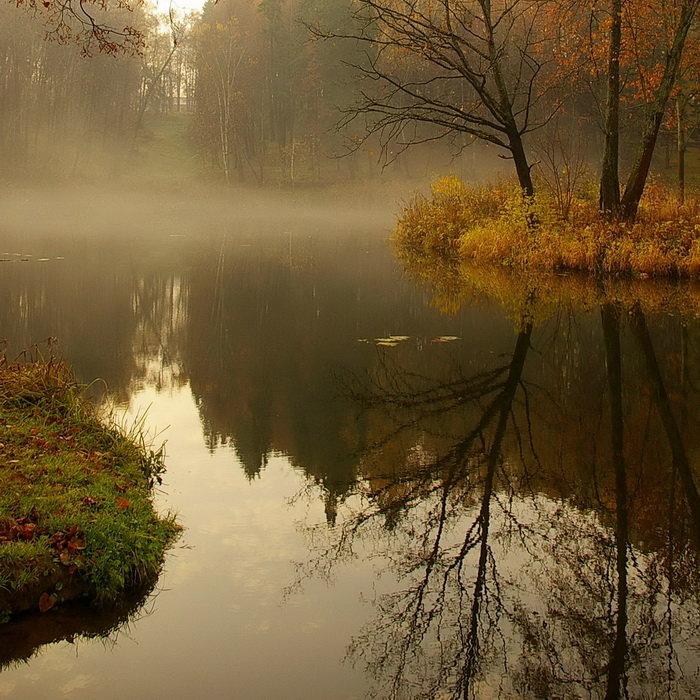 туман над прудом