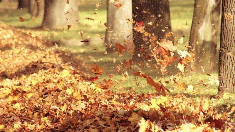 осениий листопад на ветру