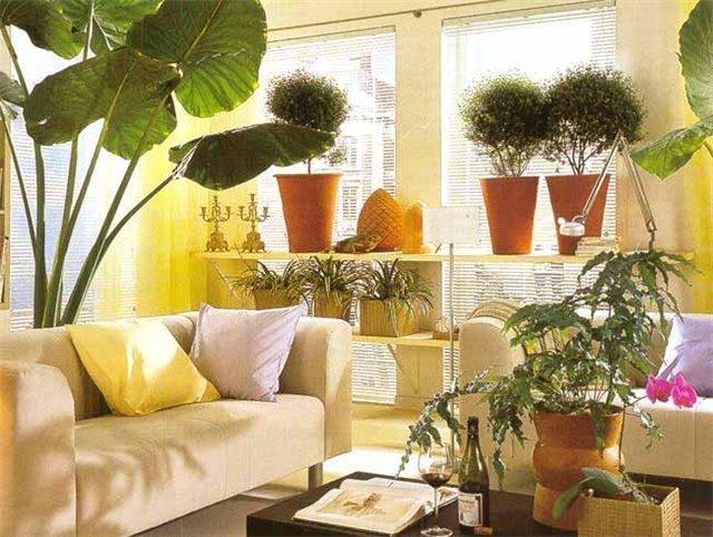 Комнатные растения в интерьере гостиной.