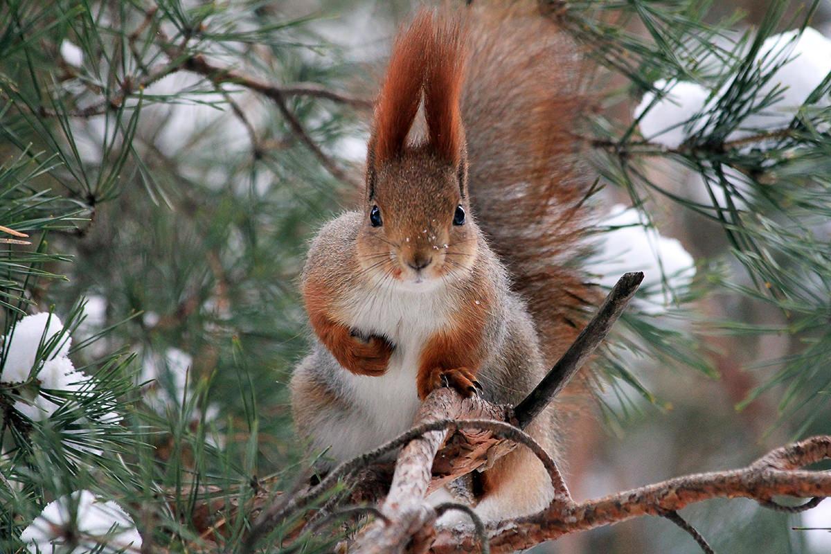 Нквд, картинки с лесными зверями