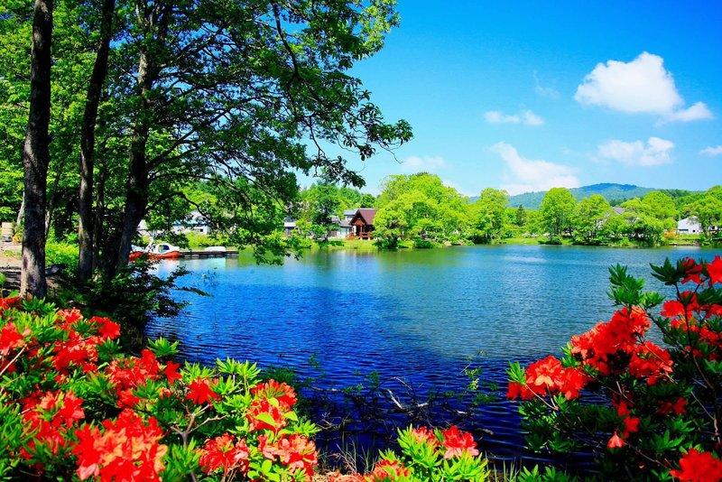 lago azul y hermoso paisaje tropical con flores silvestres banco de