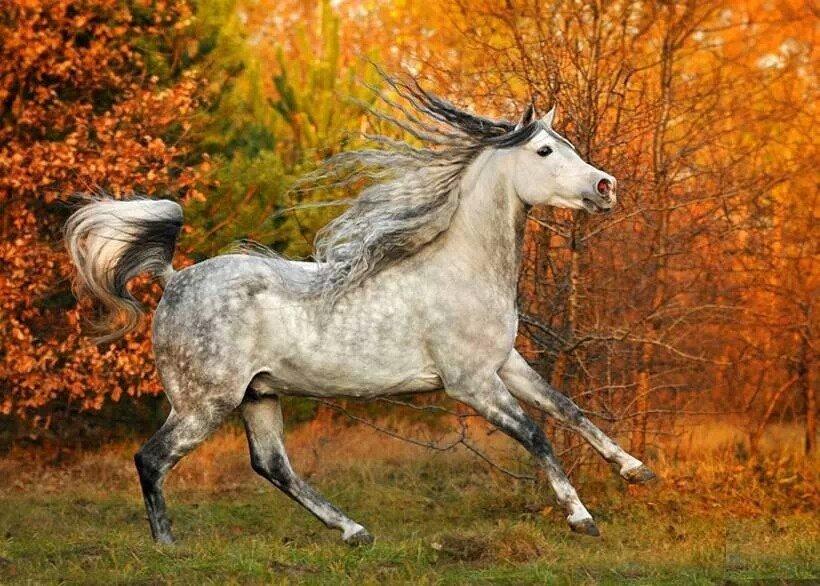 Лошадь в яблоках красивая картинка