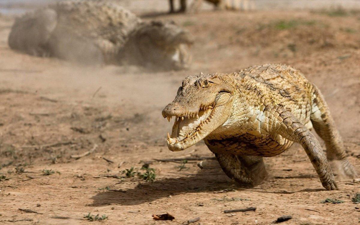 Смешная картинка с крокодилом