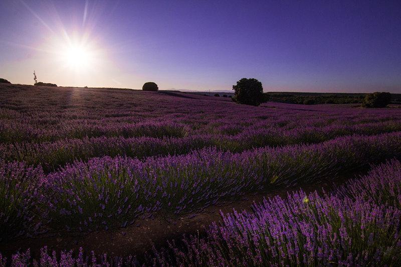 Рассвет над лавандовым полем  Испания Malacuera