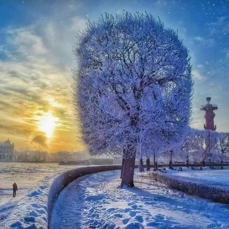 картинки снежность в городе действия
