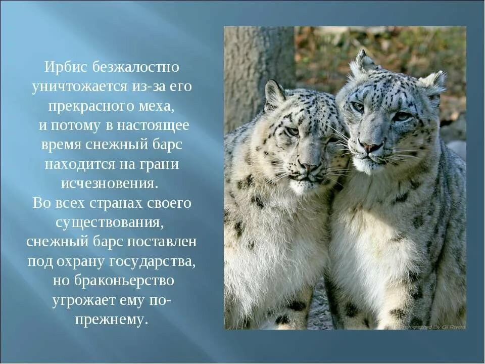 Фото и описание животного россии вот мне