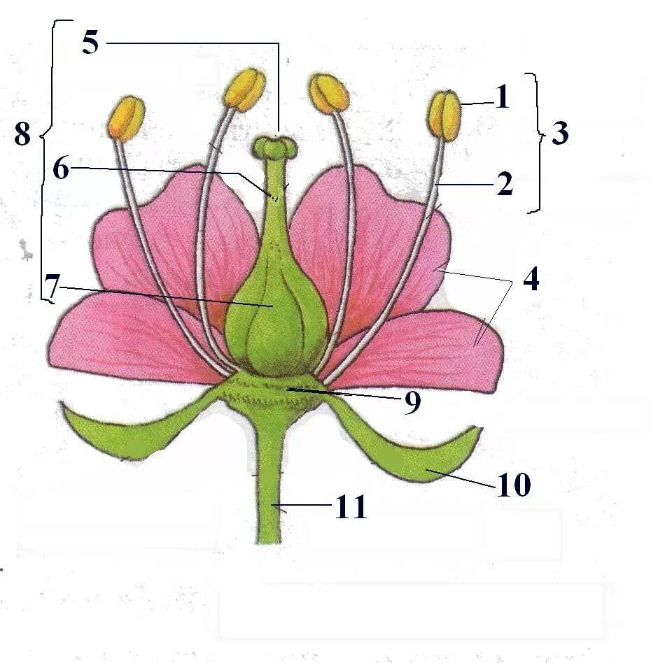 Картинки цветка по частям