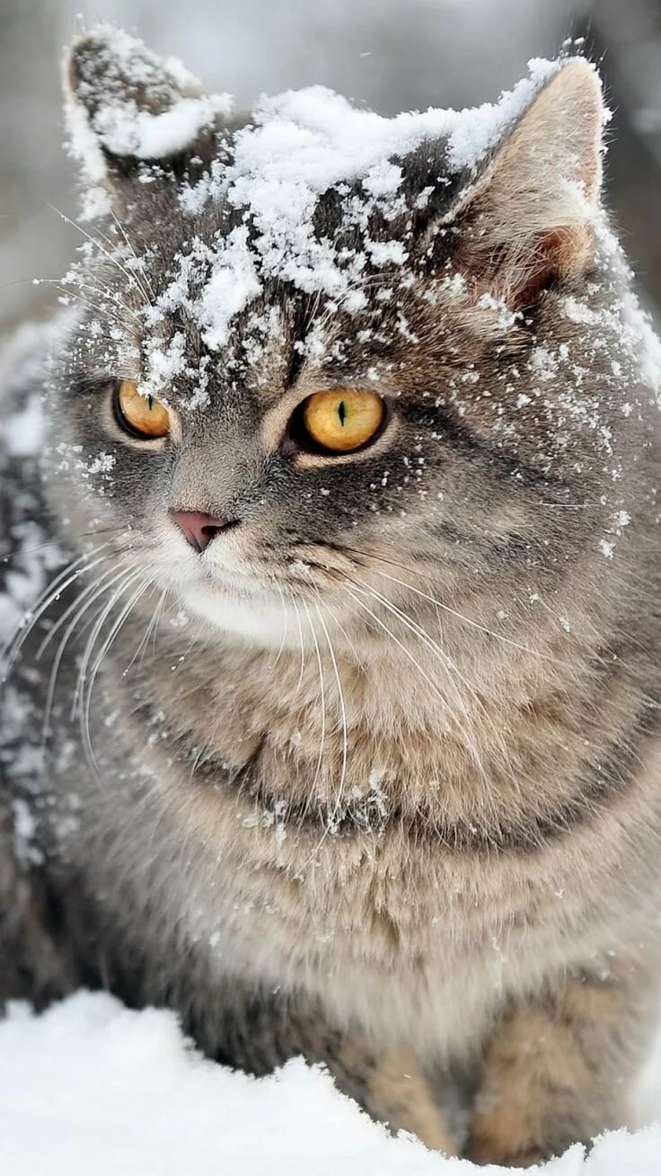 OK who threw the snowball? I suppose you think it's funny.' ✿ ⊱ ╮ Kittens Cats, Cute cats, Pretty cats
