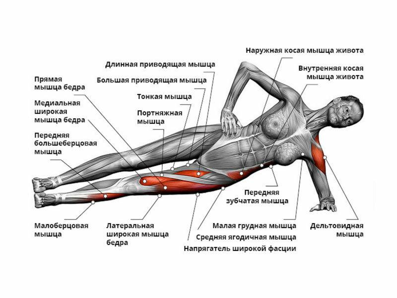 того, аналогичному какие упражнения для каких групп мышц фото между