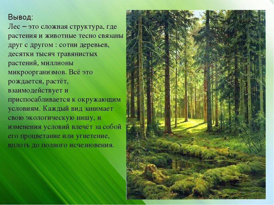 Картинки лес как природное сообщество