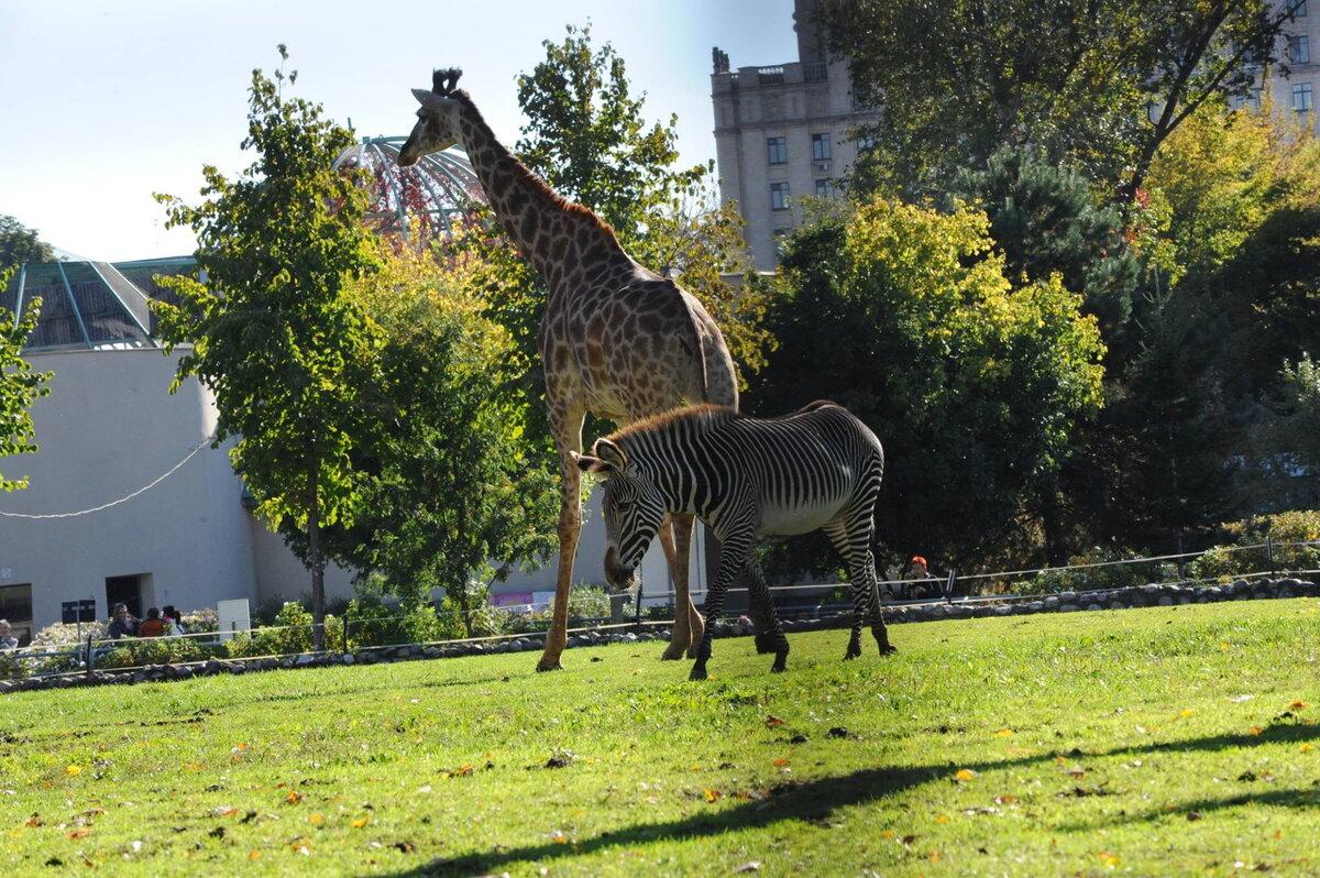 Картинки зоопарка как выглядит