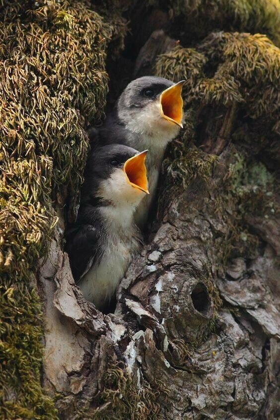 строите картинки дупла птиц клумбы своими руками
