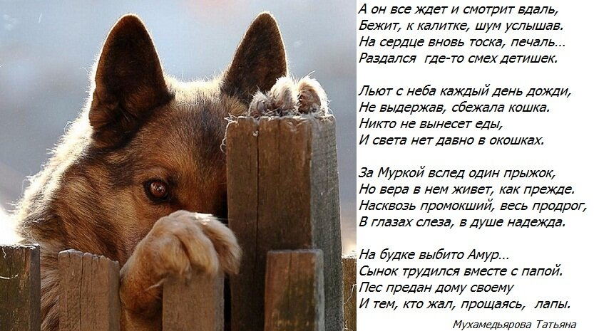 Стихи для собаки любимой