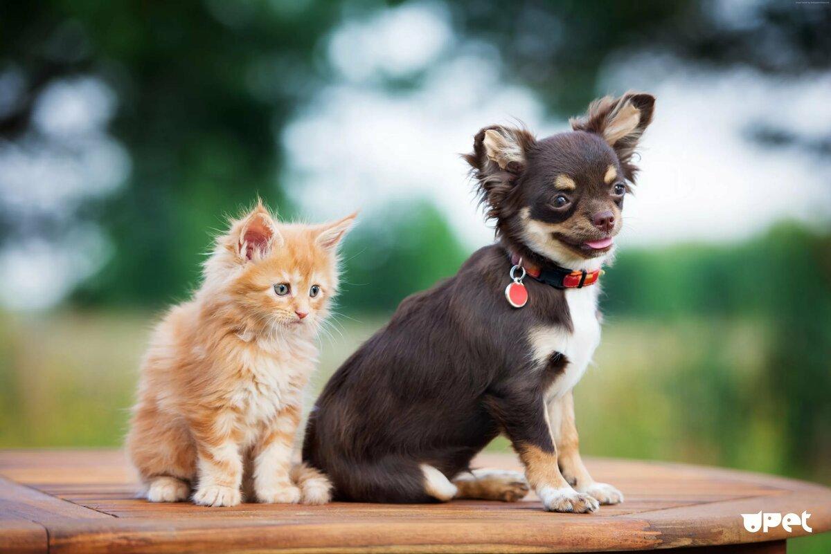 Собачки и котята картинки