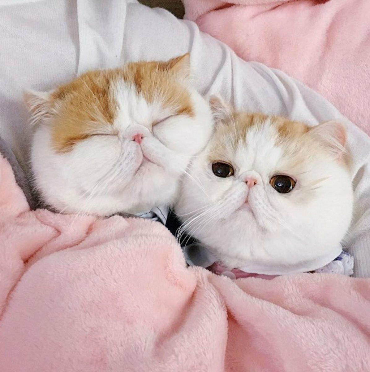 стильные картинка красивая кошка нежная просто тянуть
