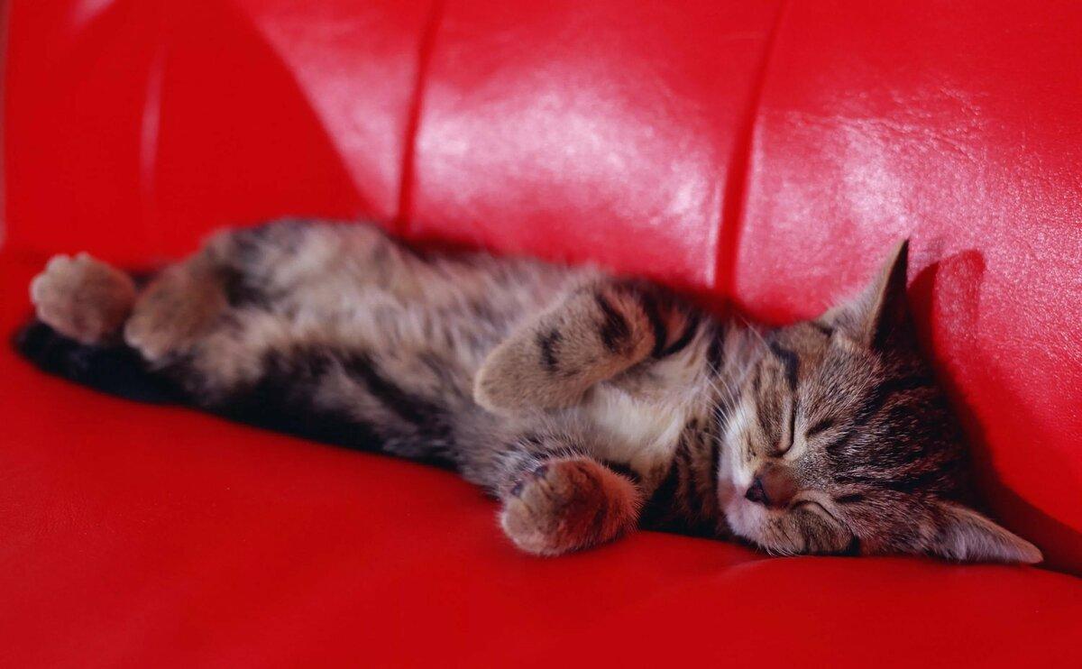 картинки котенок спит на диване ожидала, что